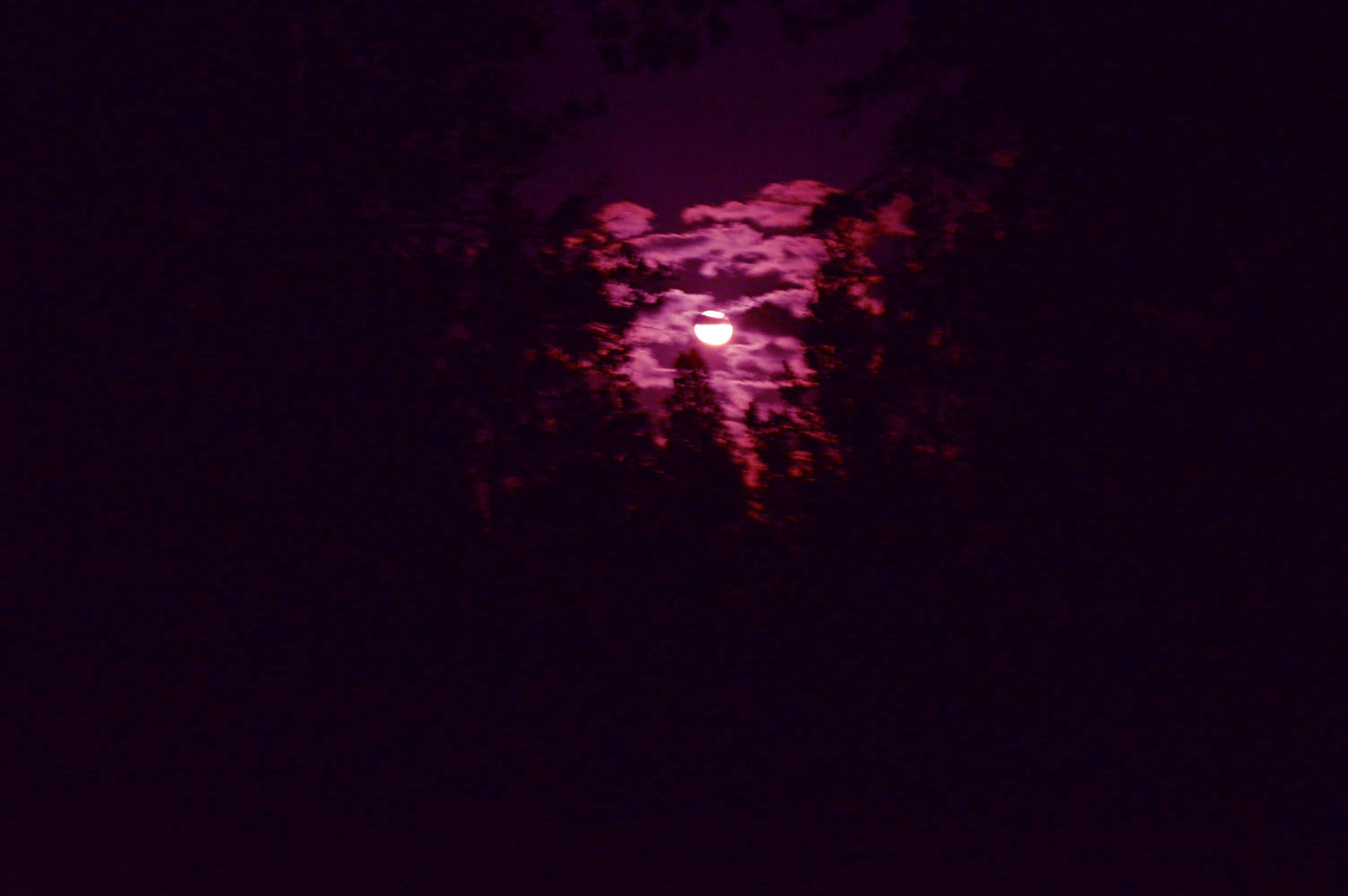 purple moon // blog-action