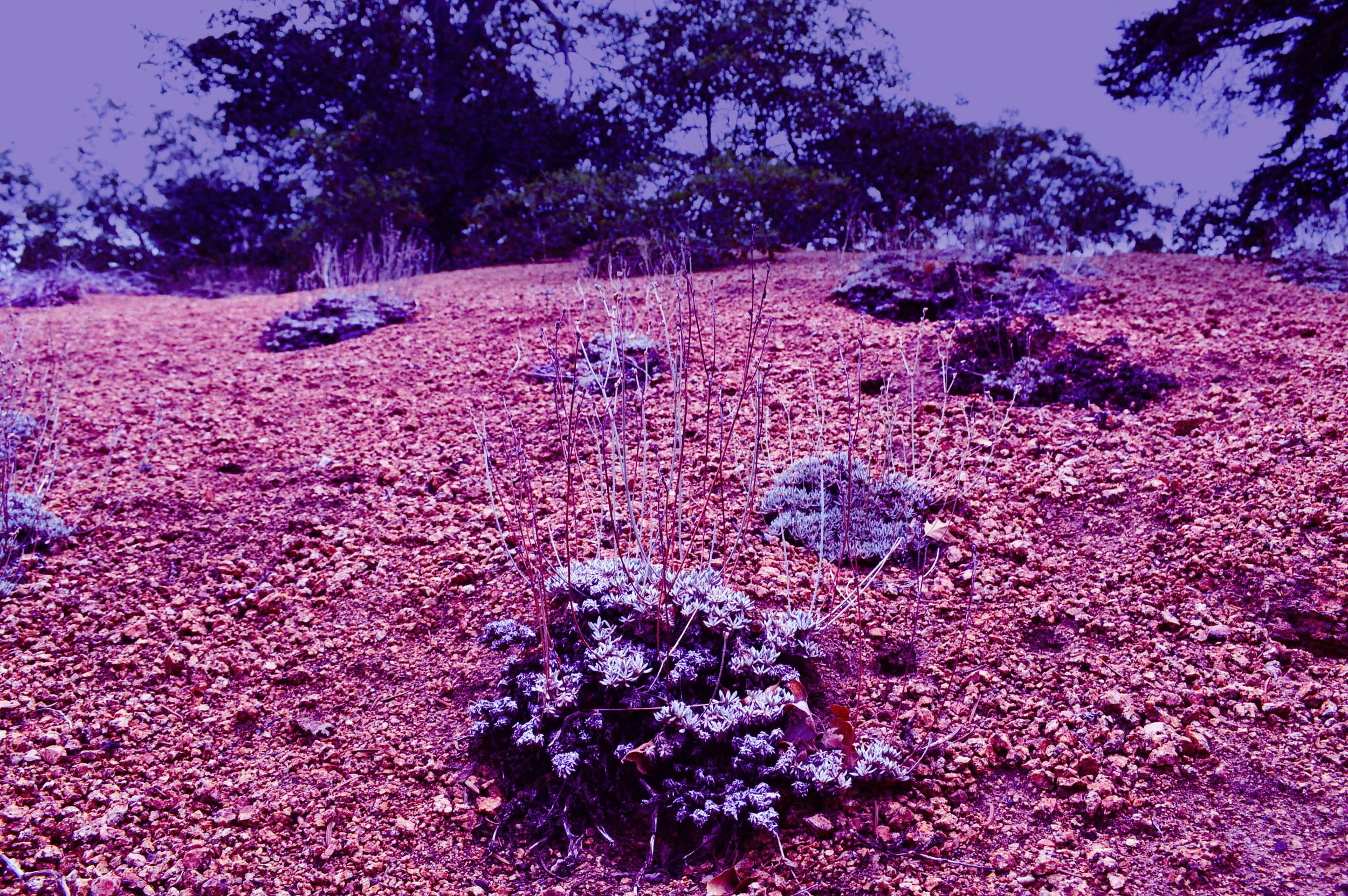 hillside lush // blog-action