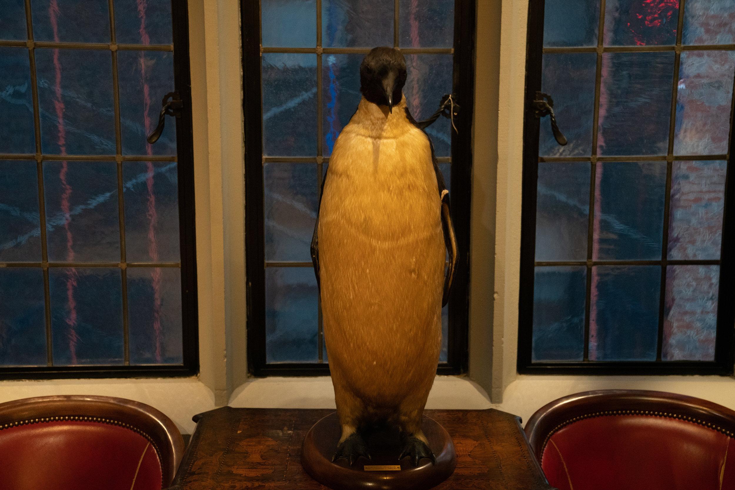 An ex-penguin in the trophy room.