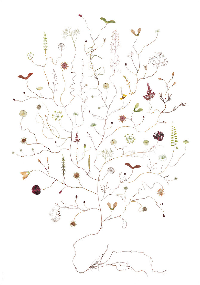 """Artist: Lotta Olson  Title:Augustitrad/August Tree  Dimensions:27 1/2"""" x 39 3/8""""  Method: illustrated work-on-paper  Condition: new - limited edition print"""