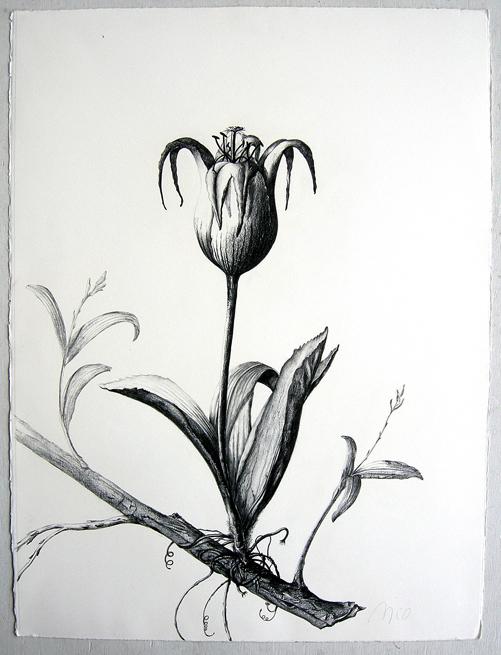 "Artist: Vico Fabbris  Name: Ovularia Orkids Tulipum  Dimensions: 22 1/2"" x 30"""