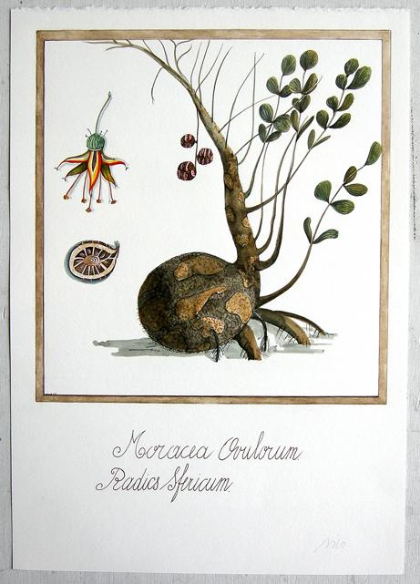 Artist: Vico Fabbris  Name: Radicus Sfericum
