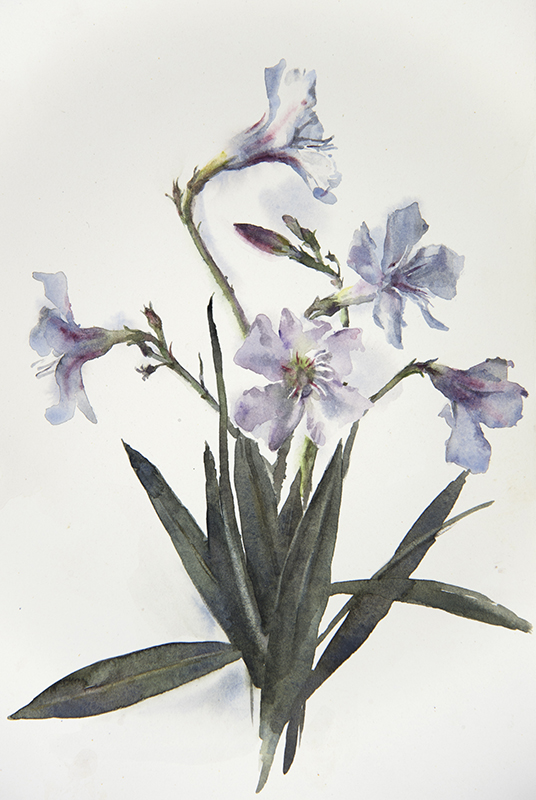 "Artist: Wendy Artin  Title: Oleander  Date: 2016  Size: 7 1/2"" x 11""  Method: Watercolor  Price:  Inquire"