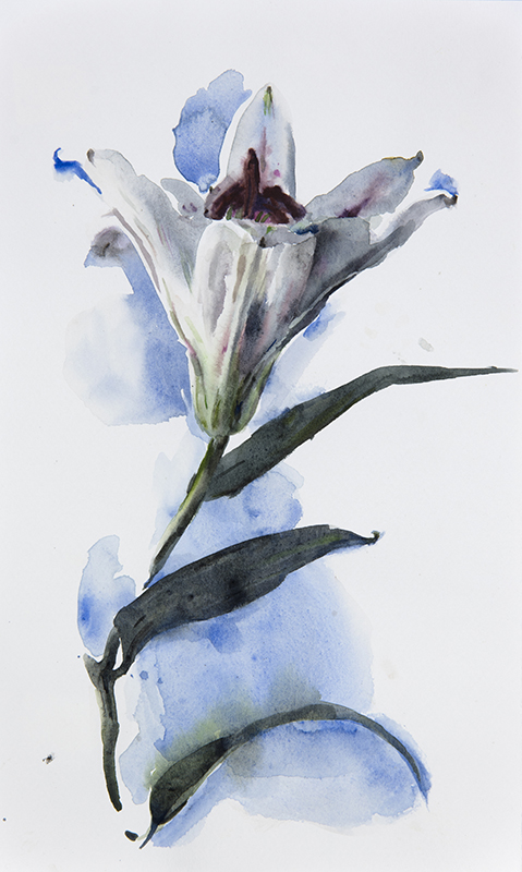"Artist: Wendy Artin  Title: Lily on Blue  Date: 2017  Size: 7"" x 11""  Method: Watercolor  Price:  Inquire"