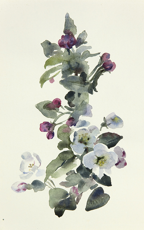 "Artist: Wendy Artin  Title: Quick Blossom Branch  Date: 2017  Size: 7"" x 10""  Method: Watercolor  Price:  Inquire"