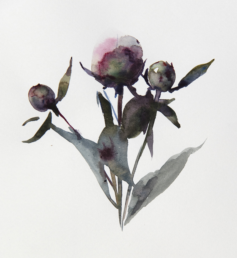 "Artist: Wendy Artin  Title: Peonies 1  Date: 2018  Size: 4.7"" x 6""  Method: Watercolor  Price:  Inquire"