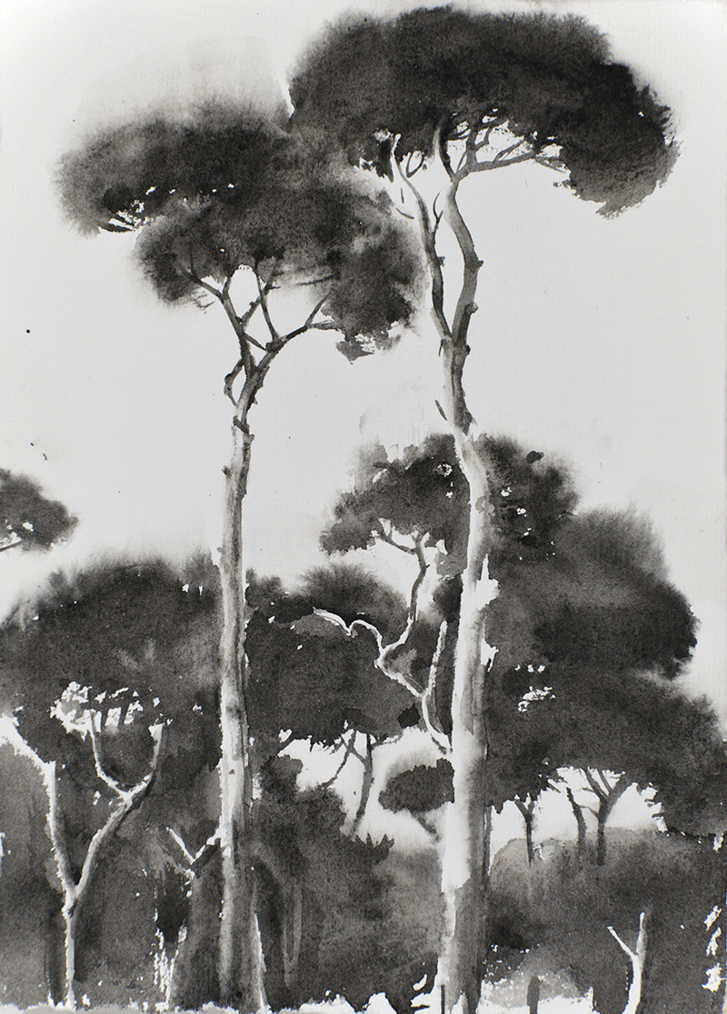 "Artist: Wendy Artin  Title: Small Black Stretching Pines Villa Pamphili  Date: 2018  Size: 5"" x 7""  Method: Watercolor  Price:  Inquire"