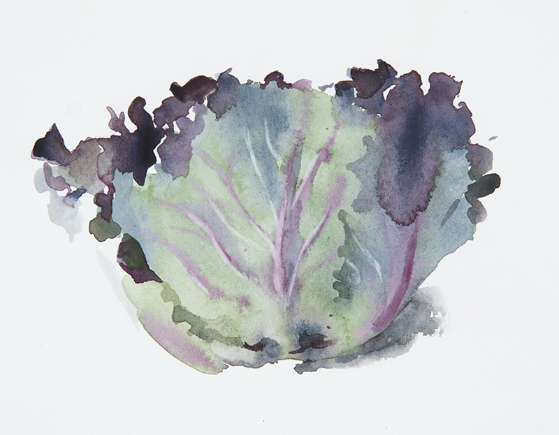 "Artist: Wendy Artin  Title: Purple Cabbage Sketch  Date: 2018  Size: 5.5"" x 7""  Method: Watercolor  Price:  Inquire"