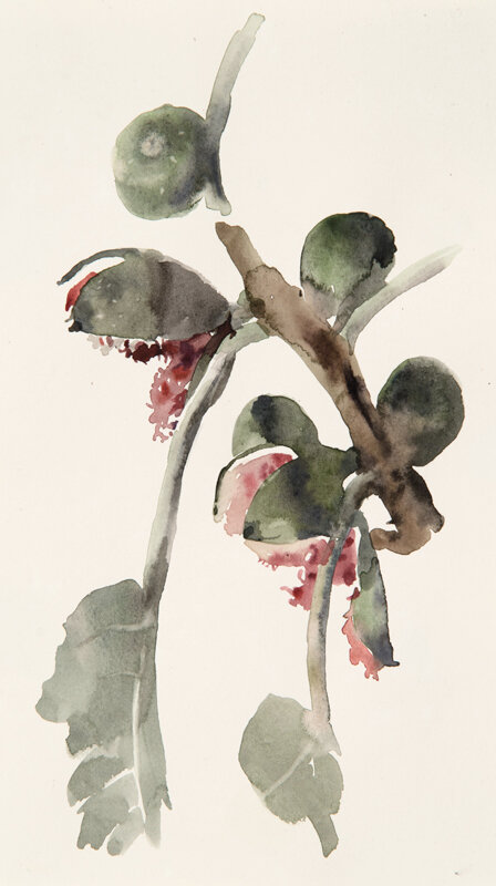 Artist: Wendy Artin  Title: Open Fig Branch  Date: 2019  Size: 6x10  Method: Watercolor  Price:  Inquire
