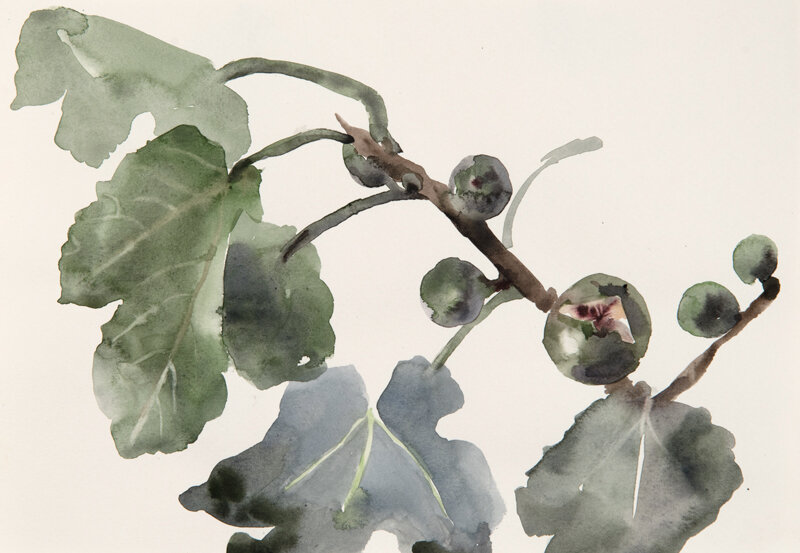 Artist: Wendy Artin  Title: Sketchy Fig Branch  Date: 2019  Size: 7x10  Method: Watercolor  Price:  Inquire