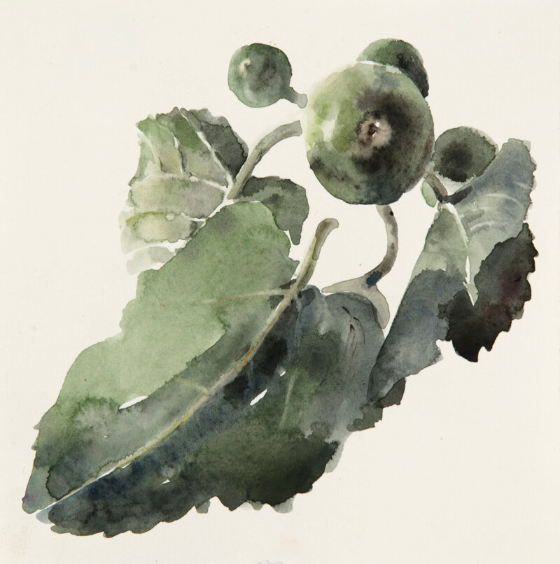 Artist: Wendy Artin  Title: Green Fig Branch  Date: 2019  Size: 7x7  Method: Watercolor  Price:  Inquire