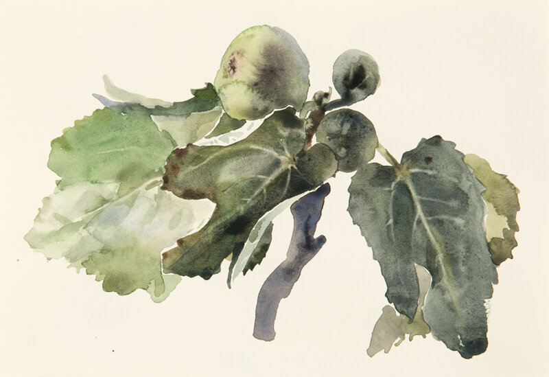 Artist: Wendy Artin  Title: Green Fig Branch 2  Date: 2019  Size: 7x9  Method: Watercolor  Price:  Inquire