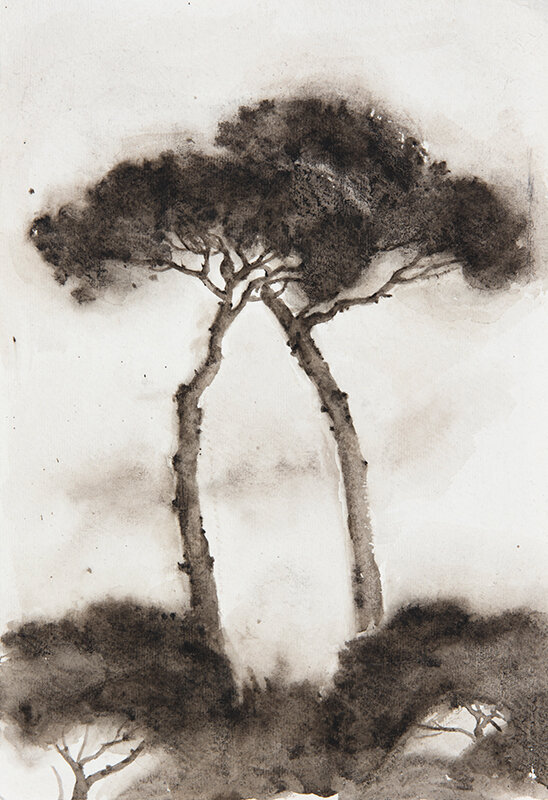 Artist: Wendy Artin  Title: Parasol Pine Lovers  Date: 2019  Size: 10x14  Method: Watercolor  Price:  Inquire