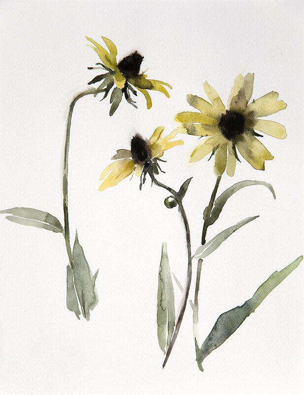 Artist: Wendy Artin  Title: Black Eyed Susan  Date: 2019  Size: 8x10  Method: Watercolor  Price:  Inquire