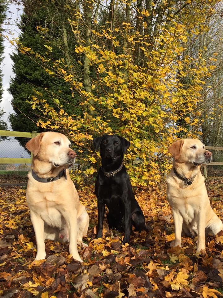 Geoffrey, betty & poppy / fiona turton
