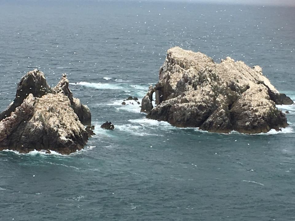 Gannet rock.jpg