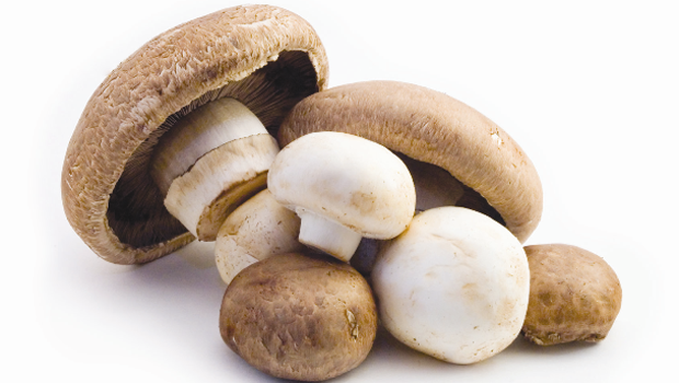 Check out our Mushrooms