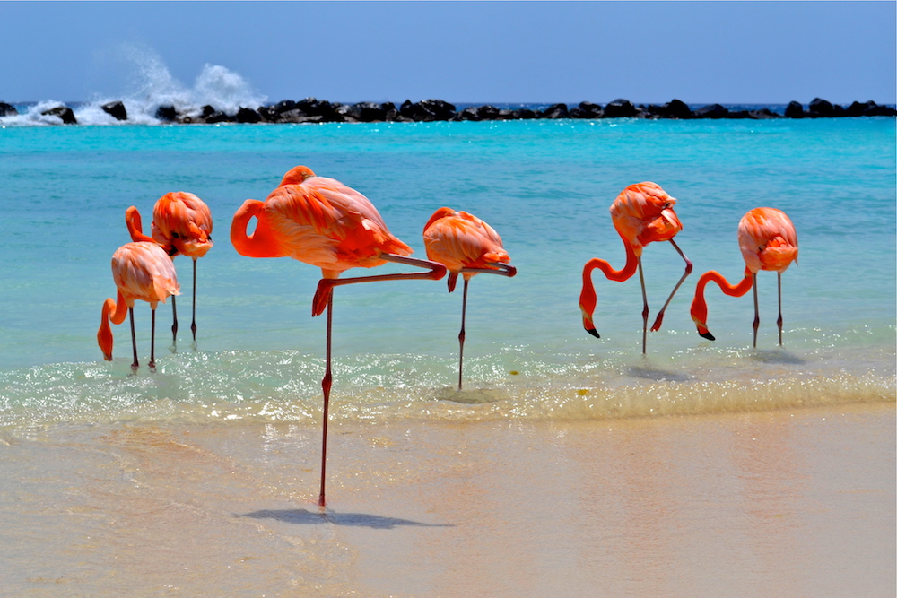 Flamingo Beach is located on Renaissance Island and is accessible by boat. Image courtesy of the Aruba Tourism Authority.