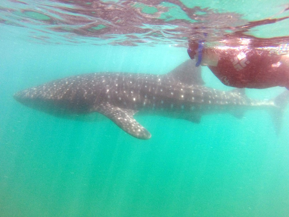 Emily takes a swim with BAE. Image courtesy of  Cabo Adventures .