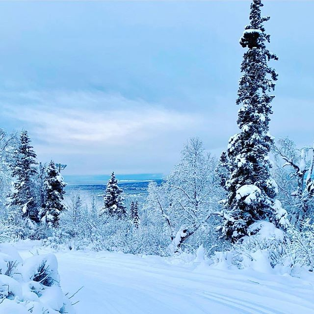 ☃️Anchorage, Alaska on Winter Solstice, taken by my good friend @monicaanne25 on her morning cross-country ski ❄️#onlyinalaska