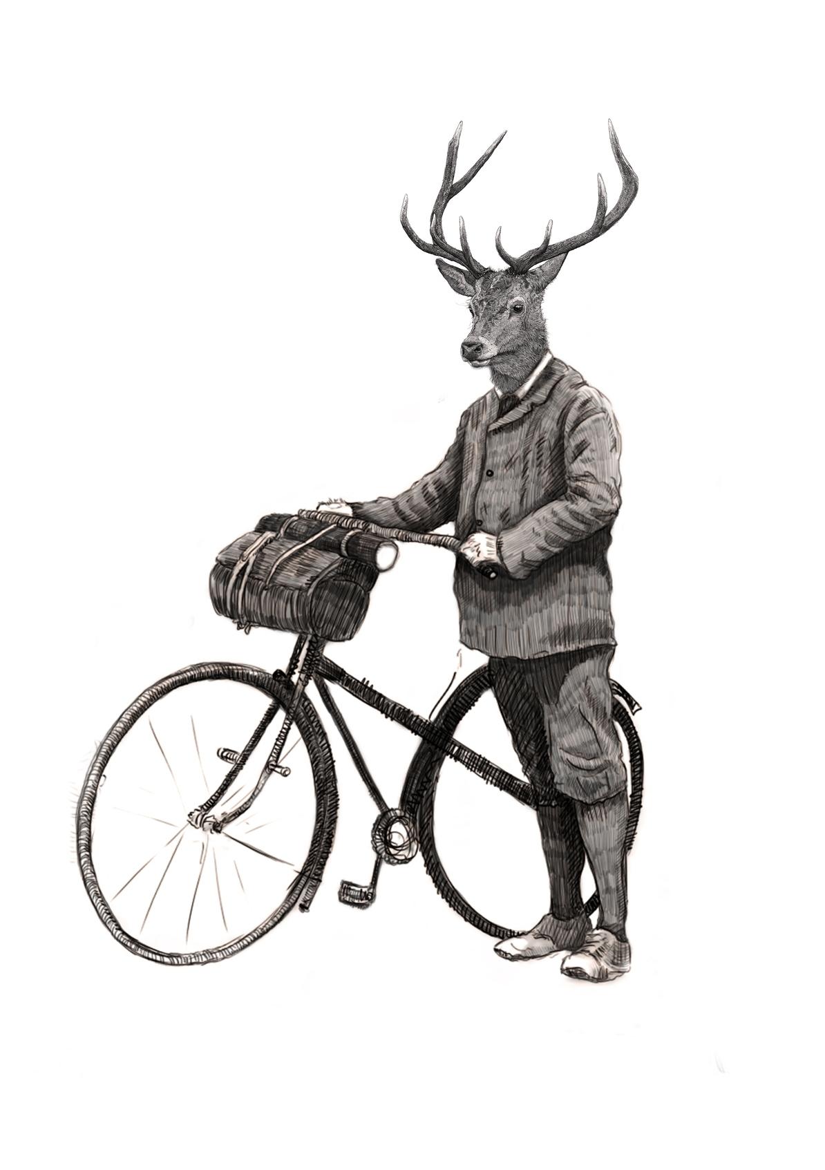 Stag cyclist.jpg