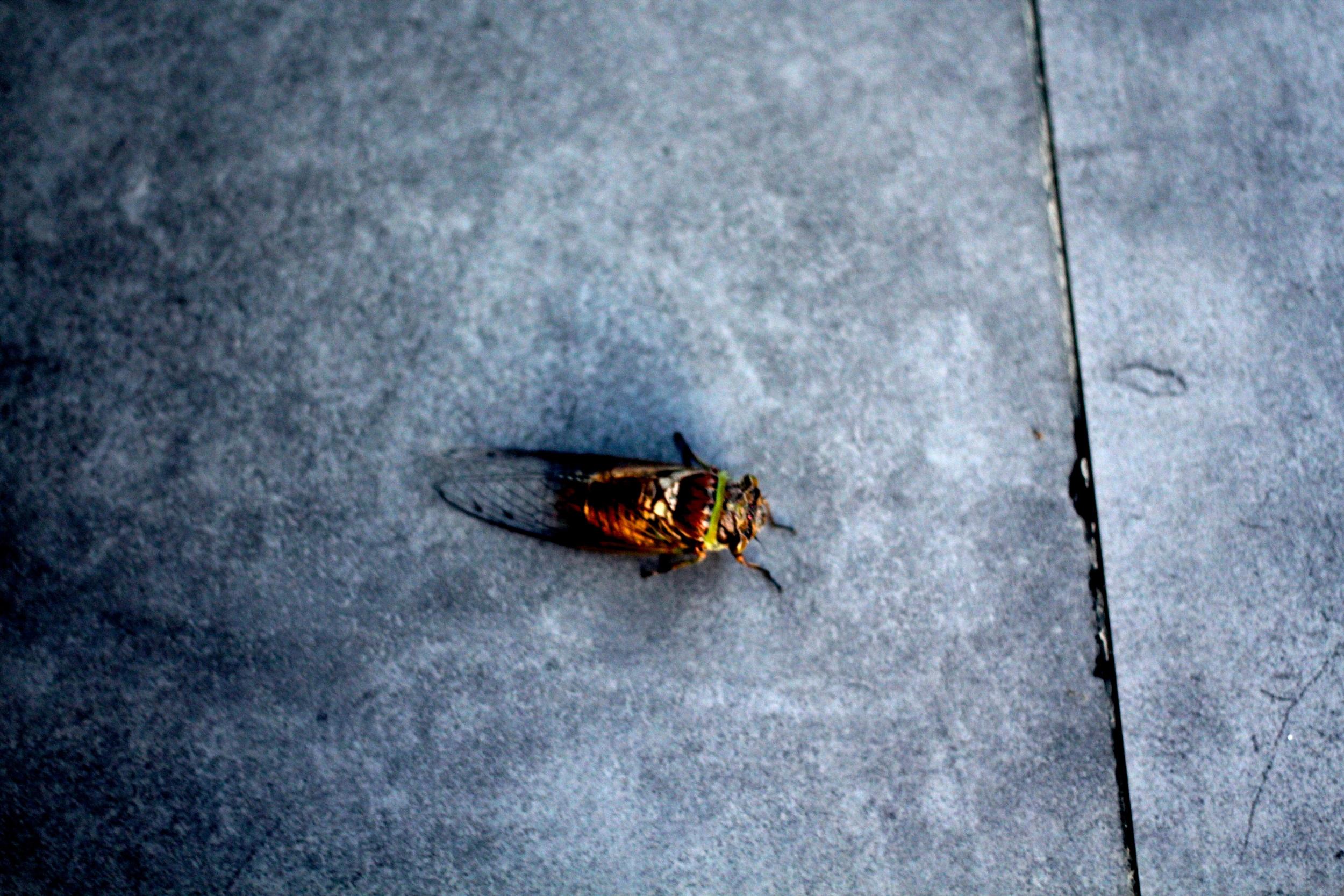 Big A$$ Bugs