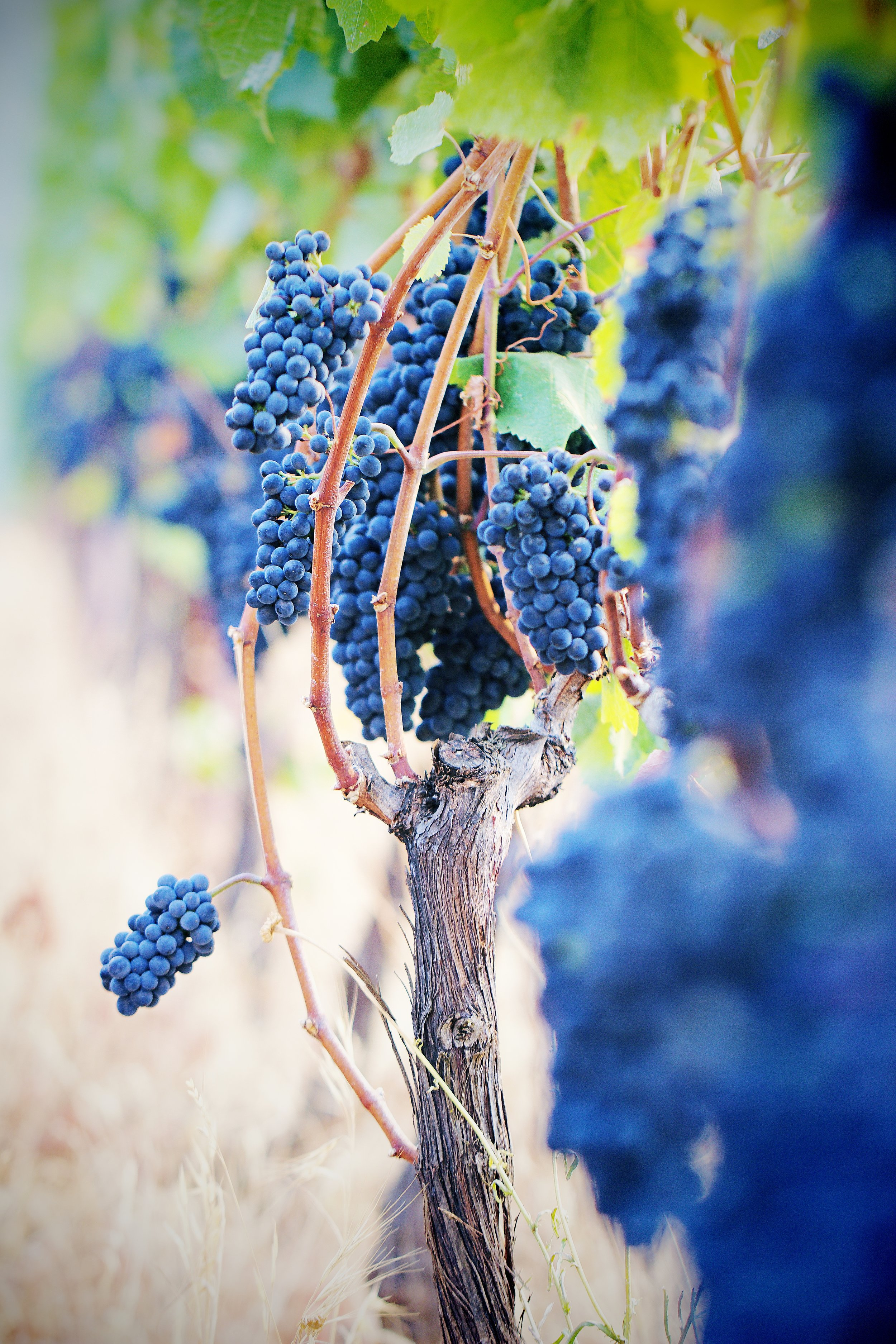 IMG_3633x Winery.jpg
