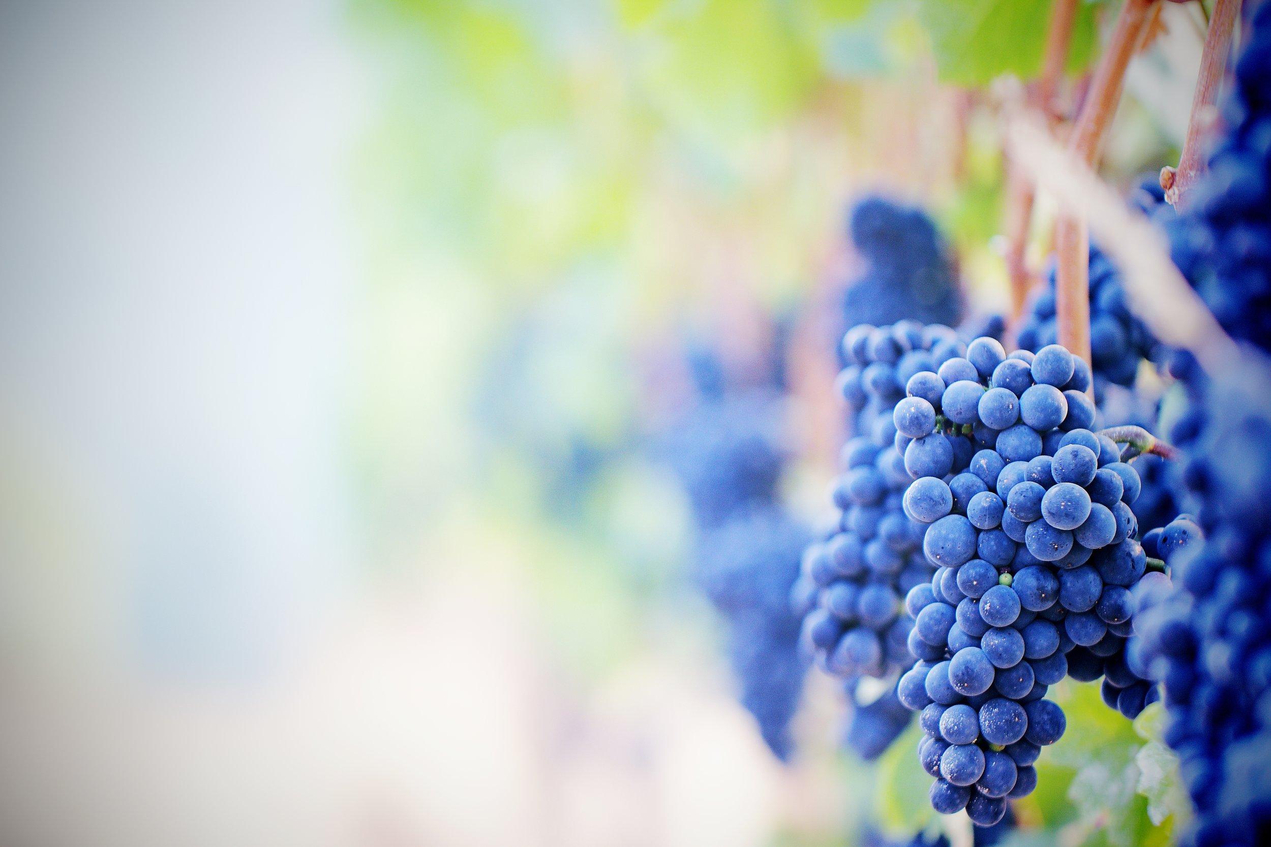 IMG_3650x Winery.jpg