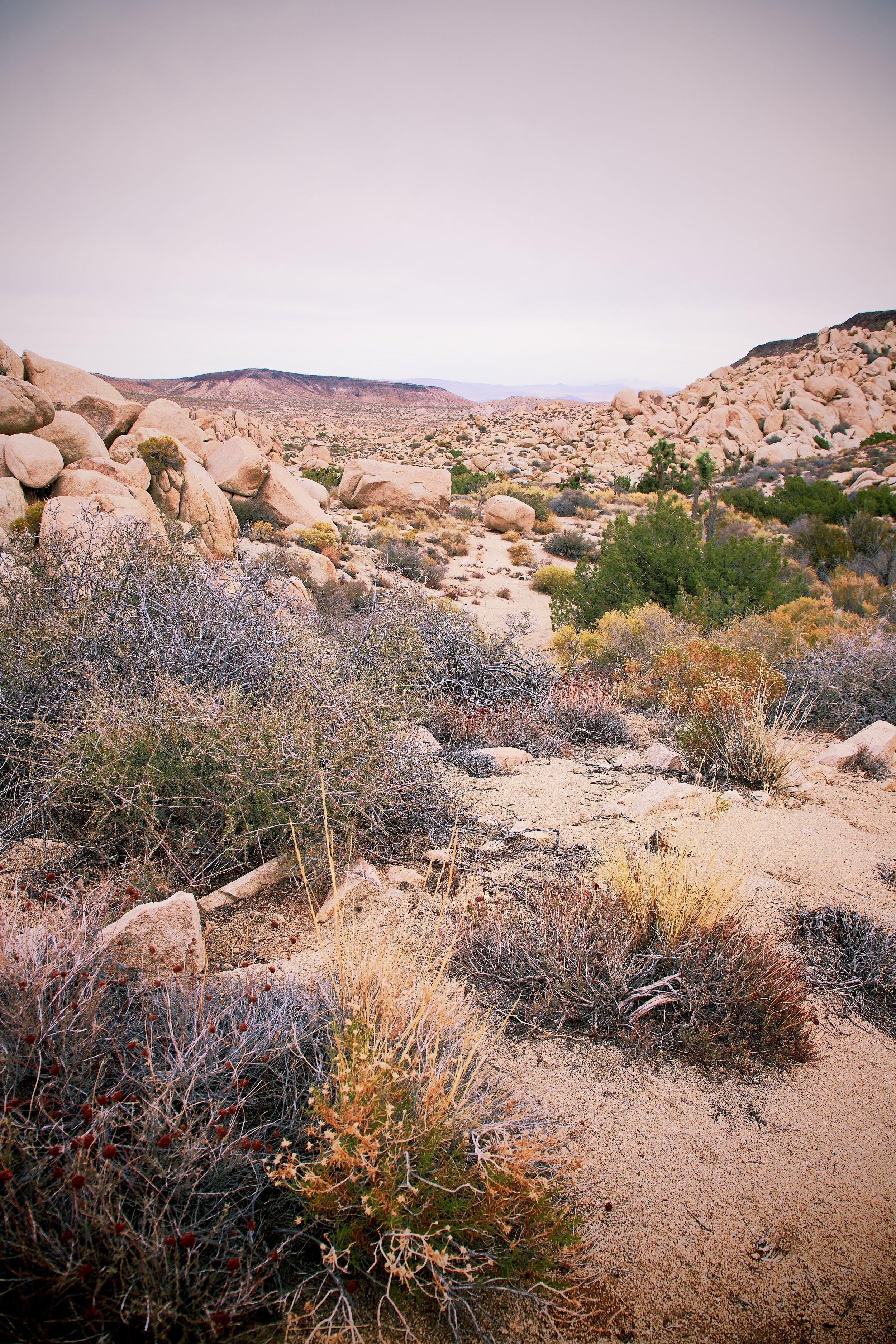 IMG_7260_x desert hike.jpg