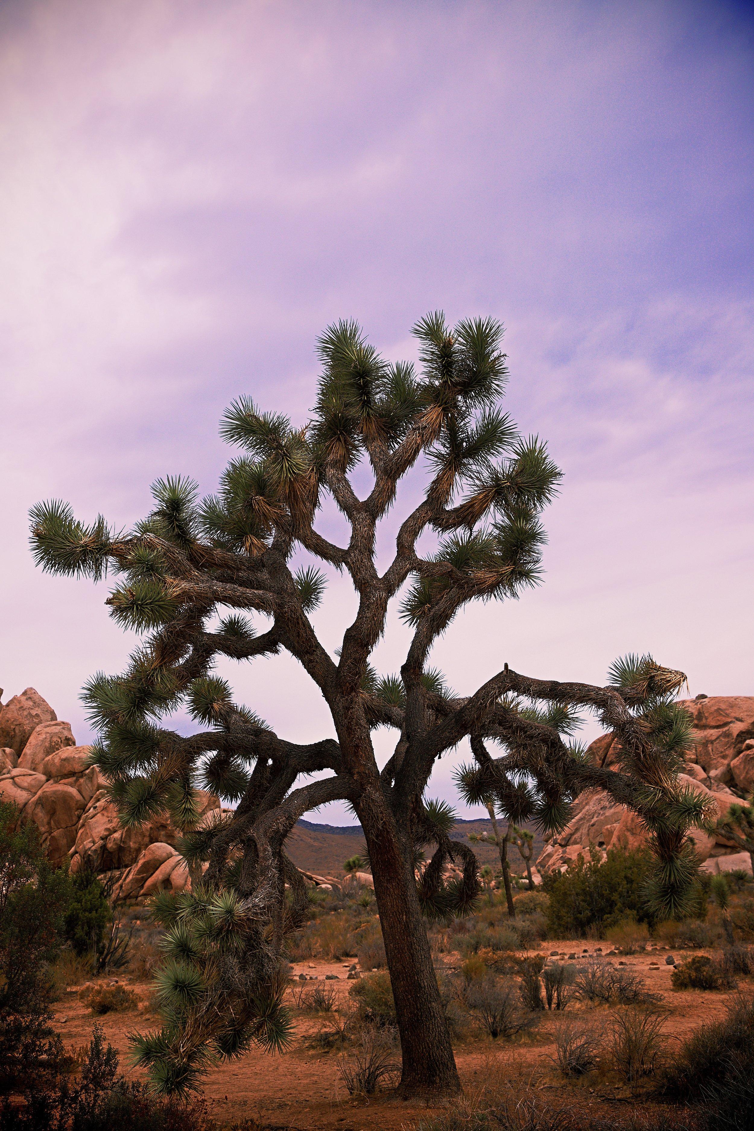 IMG_7443_x joshua tree.jpg