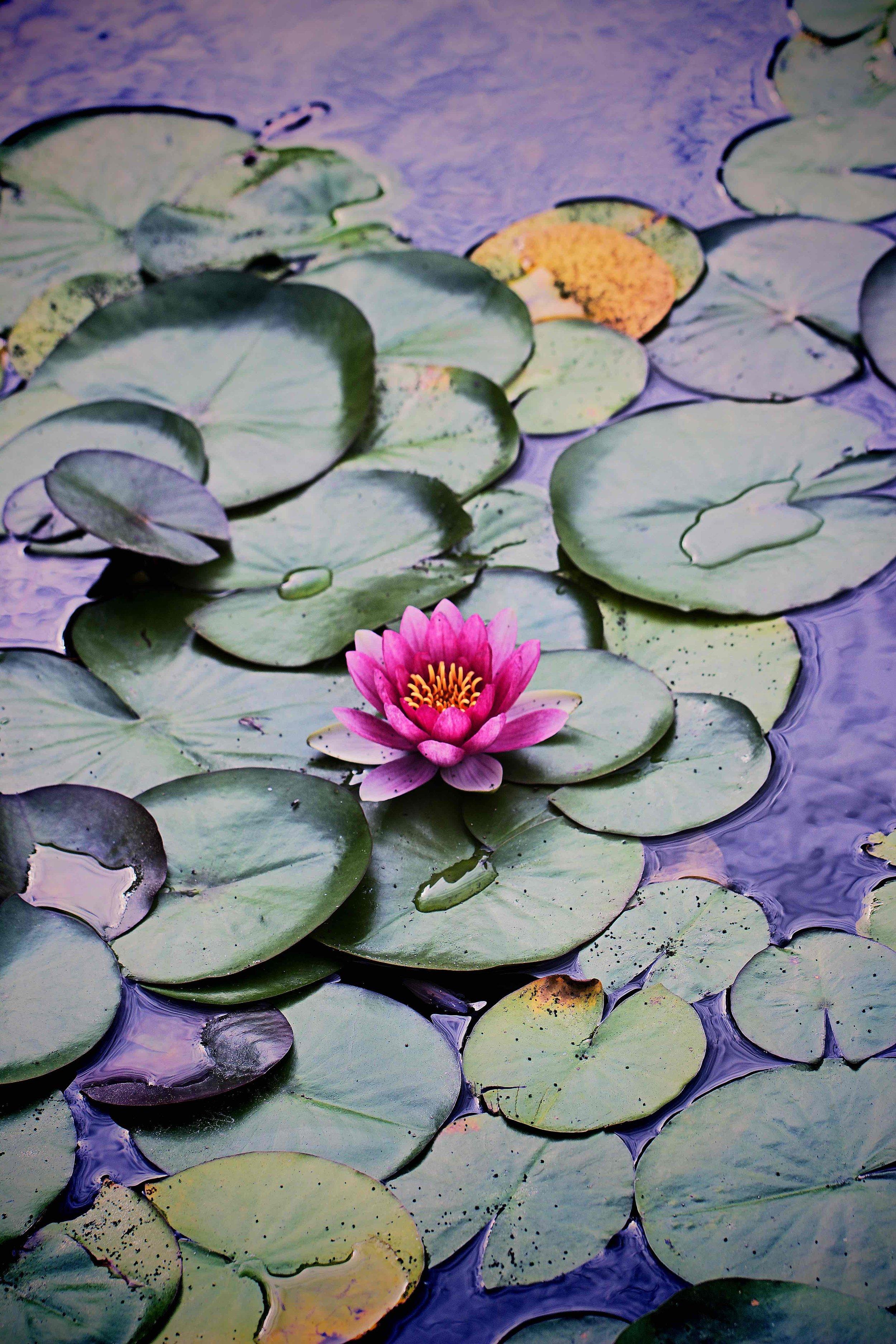 IMG_3824x Chinese Gardens_xx.jpg