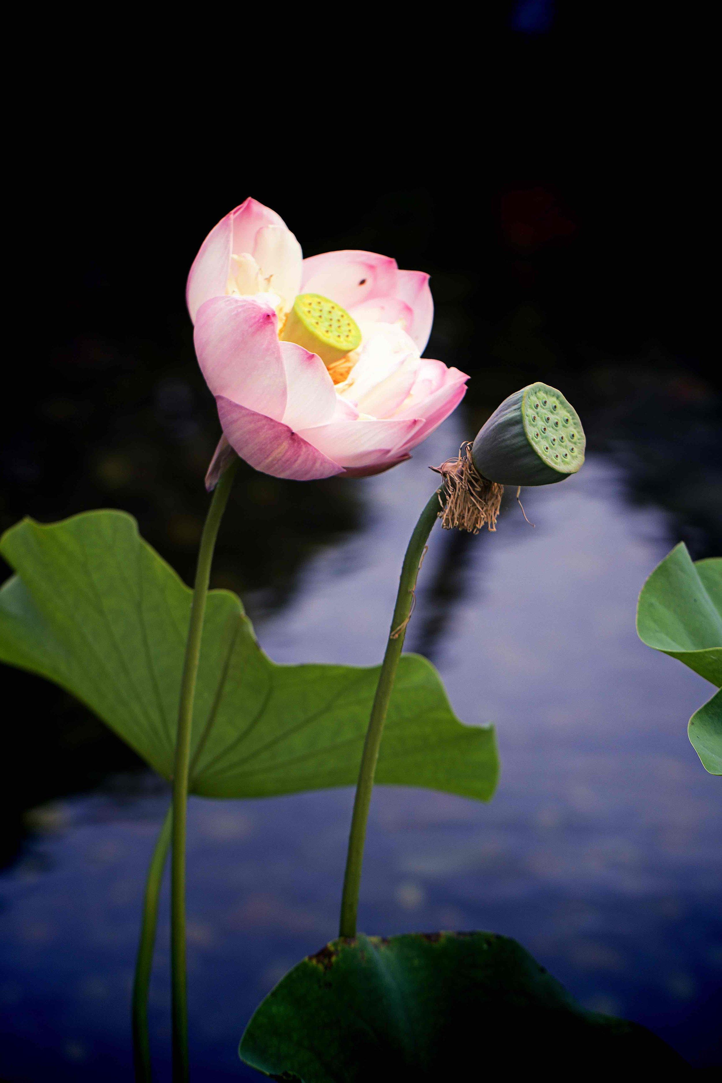 IMG_3856x Chinese Gardens_xx.jpg