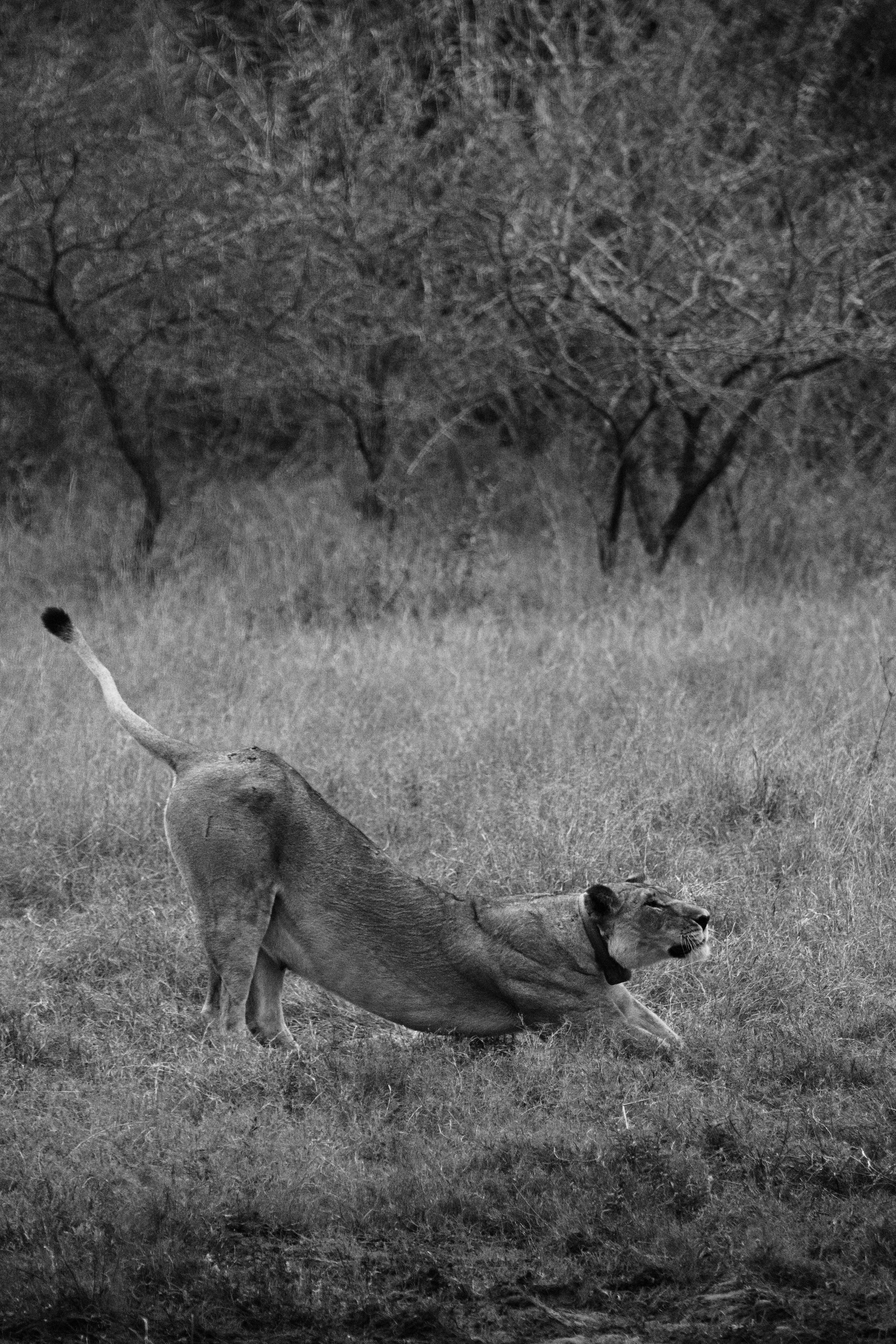 IMG_6694_8.17.18_afternoon game drive_xx.jpg