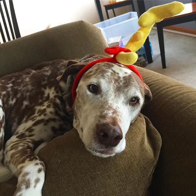 Rio isn't necessarily eager about wearing silly holiday headpieces, but he sure is a good sport about it for the sake of a cute picture. And a treat, too