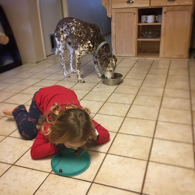 Doggy-toddler training crossover