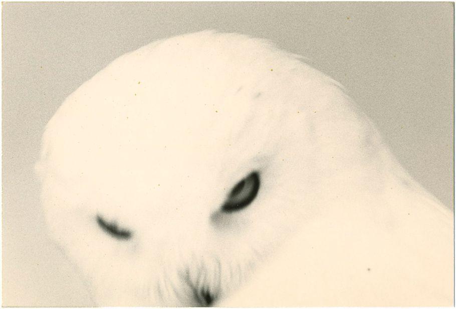 masao-yamamoto-tori-les-oiseaux-4e2656be__w910.jpg
