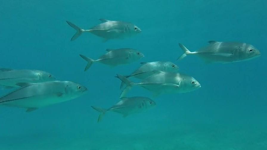 FishSchool - Copy (2).jpg