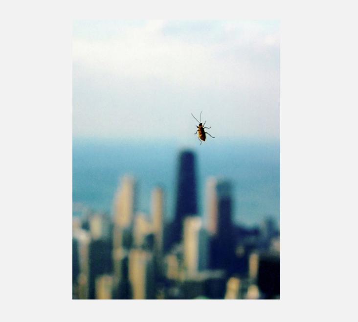 Bug_Pearlman.jpg