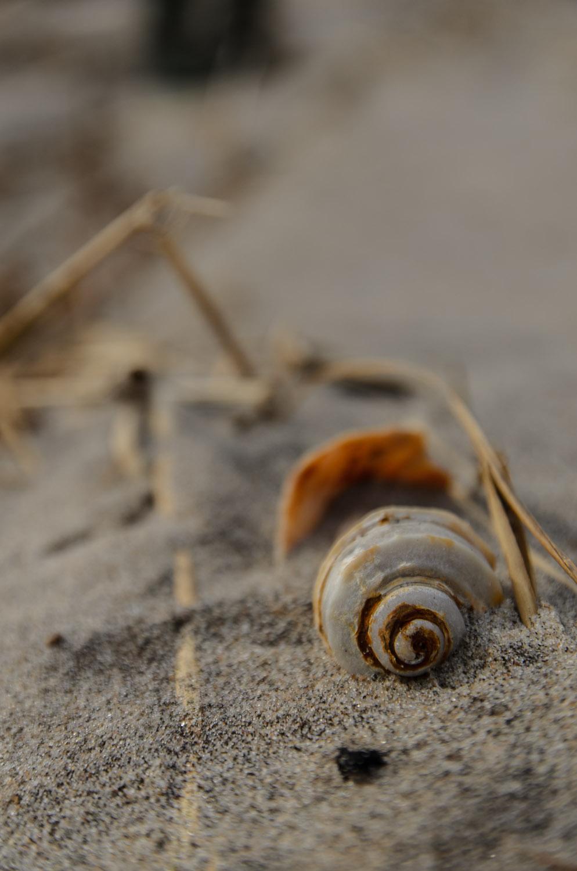 Dead Horse Bay (Heidi M. Nunnally).jpg