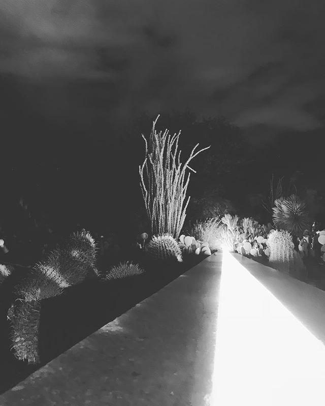 ⚡️🌵 #electricdesert #phoenix #arizona #desert #cactus #light #october #blackandwhite