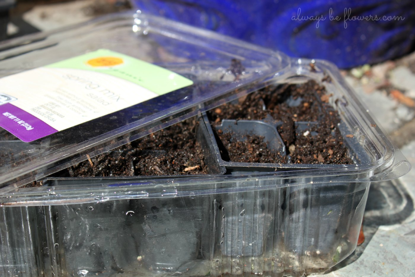 "A simple plastic container can be used as a seedling ""greenhouse."""