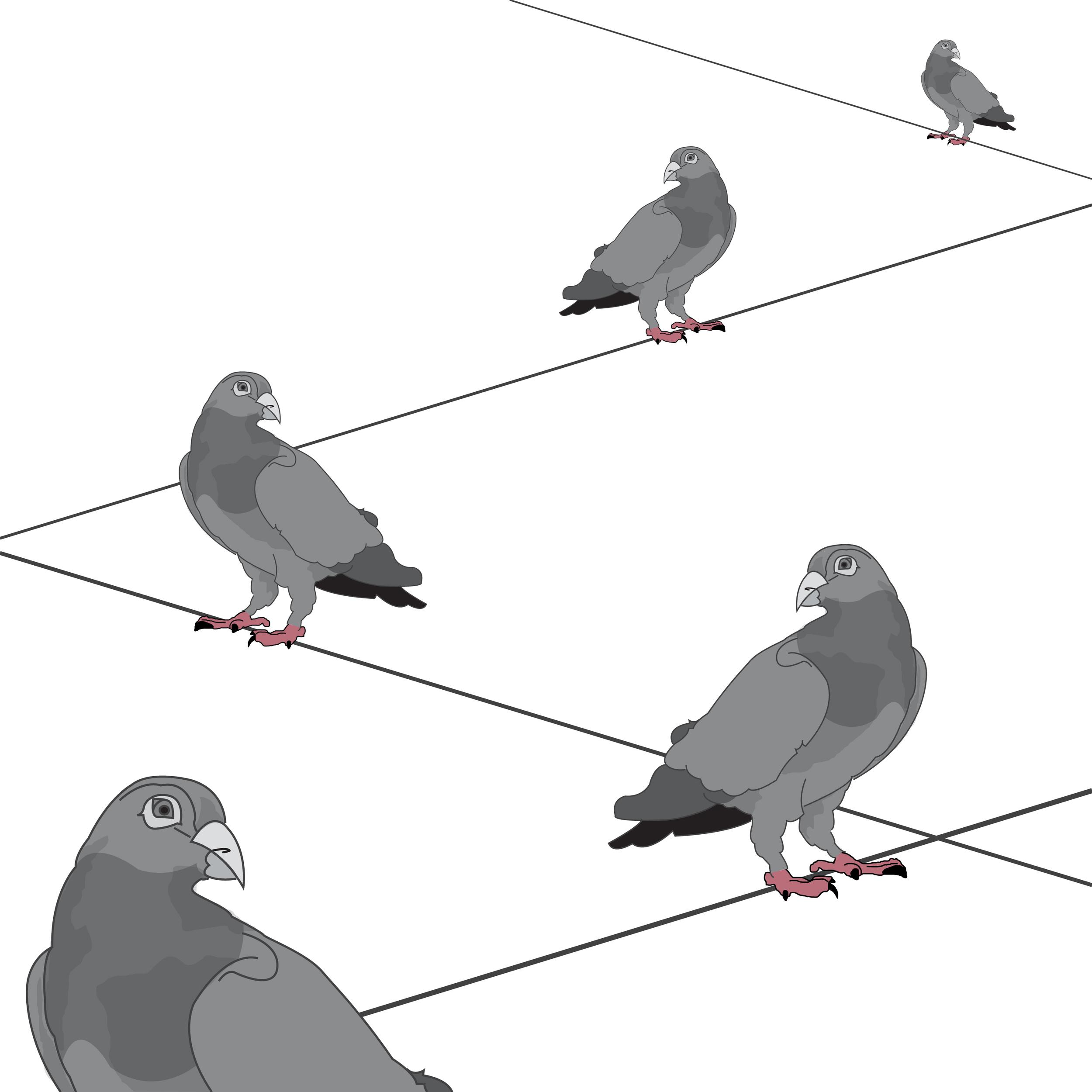 Five Pigeons.jpg
