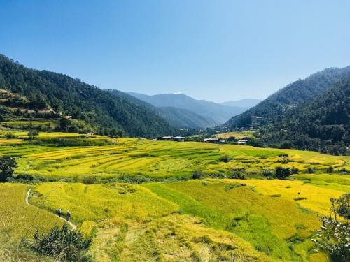 Punahka, Bhutan
