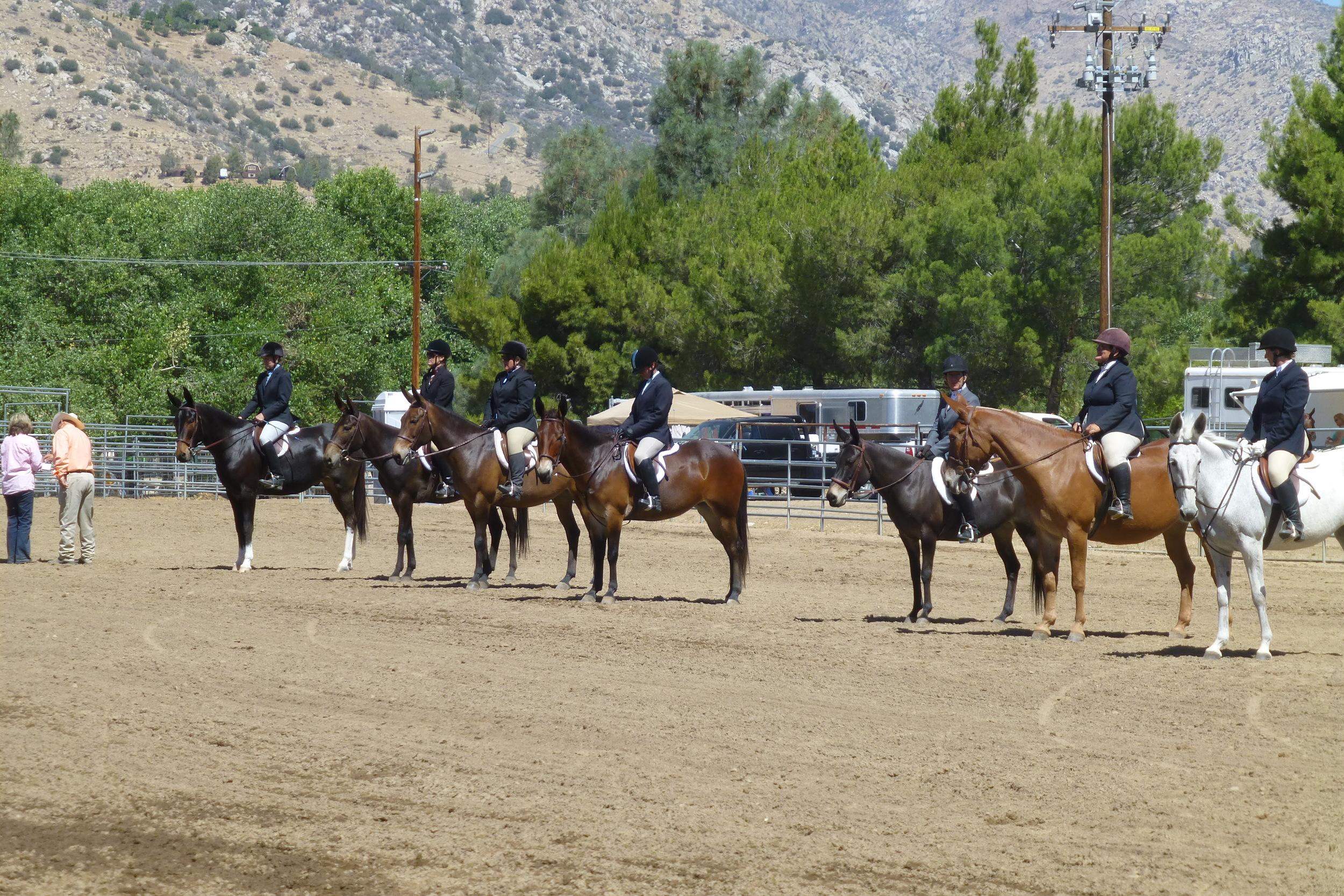 Kernville Mule and Donkey Days 2014 030.JPG