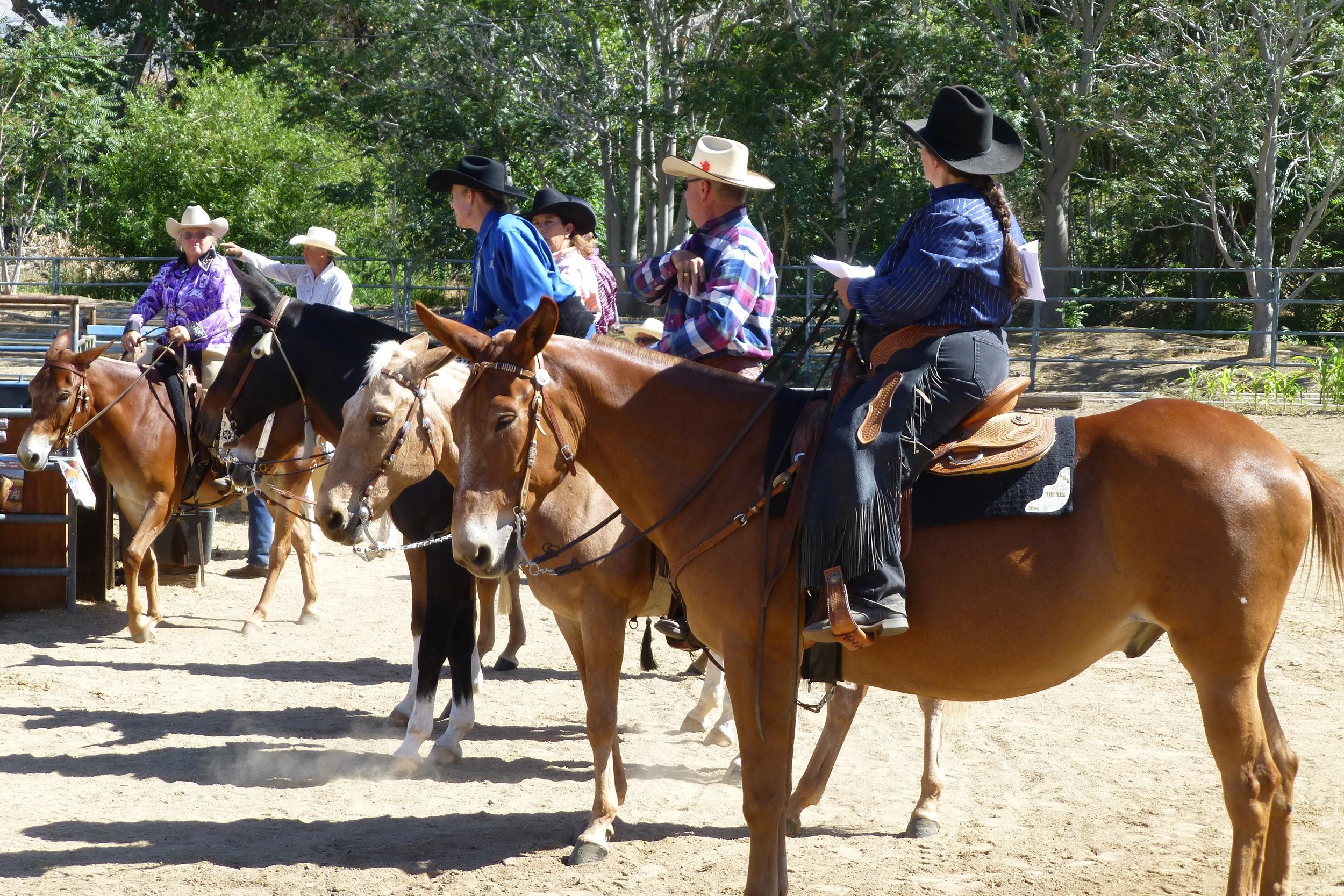 Kernville Mule and Donkey Days 2014 249.JPG