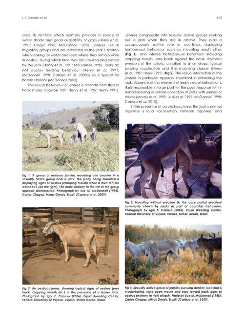 Strategies for the management of donkey jacks in intensive breeding