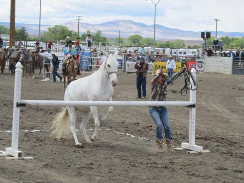 BishopMuleDays_white-mule-jumping.jpg