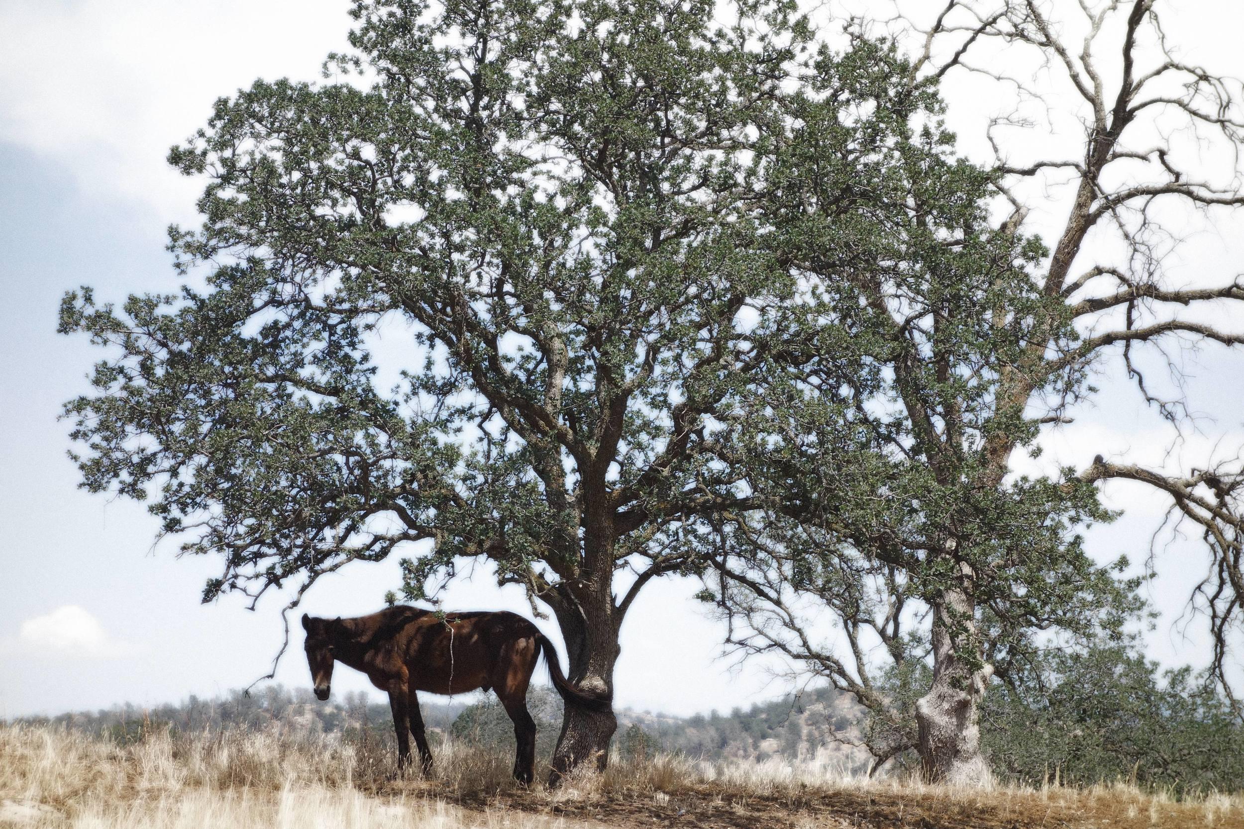oak1-min.jpg