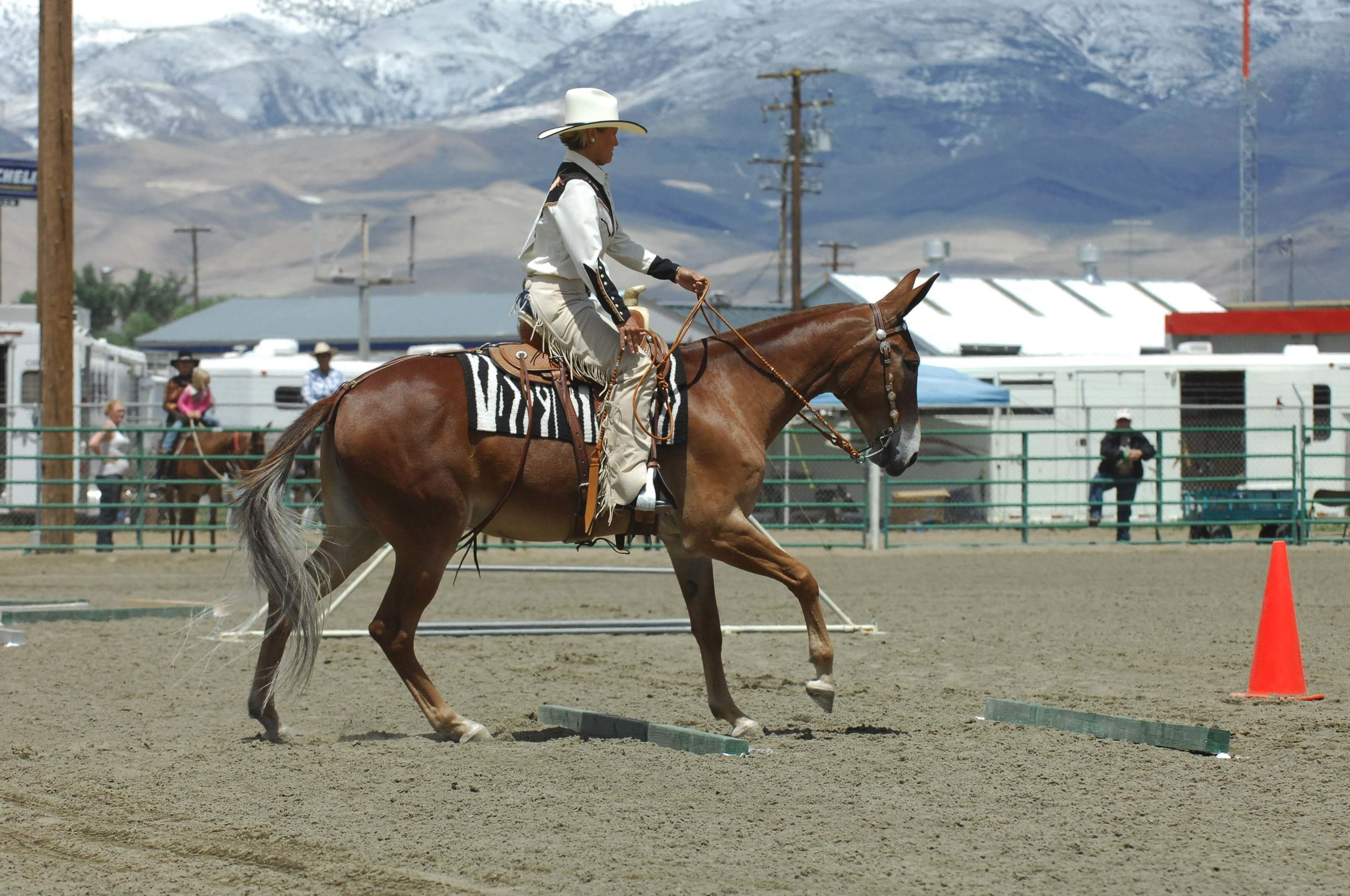 American Mule Association
