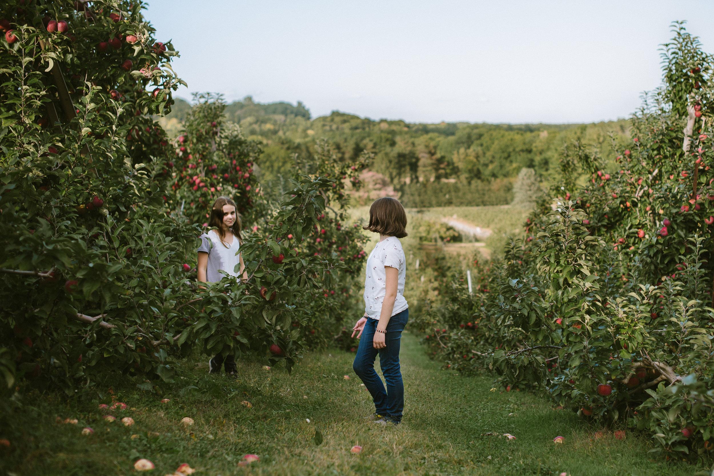 apples-9.jpg